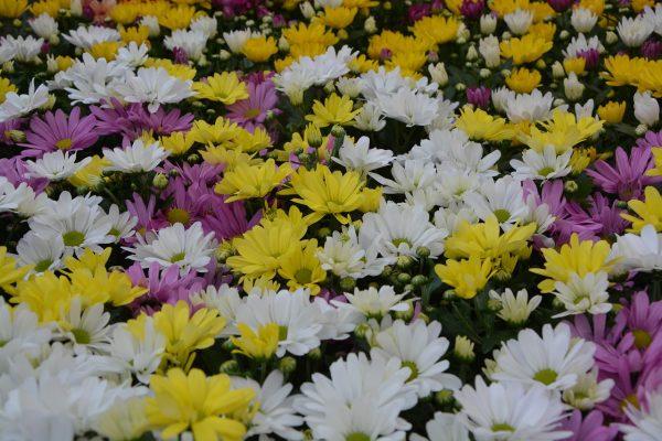 זרי פרחים לחתונה – כל מה שצריך לדעת